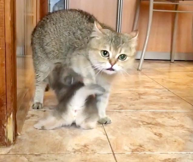 戸惑う母猫