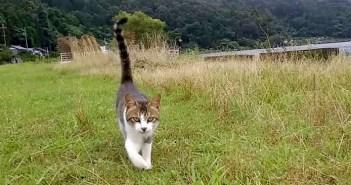 遠くの方から嬉しそうに駆け寄ってきた野良猫。どうやらモフモフしてもらいたかったようで… ( *´艸`)♡