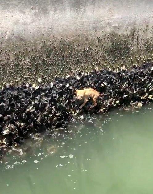 牡蠣にしがみつく子猫