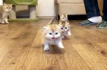 駆け寄ってくる子猫