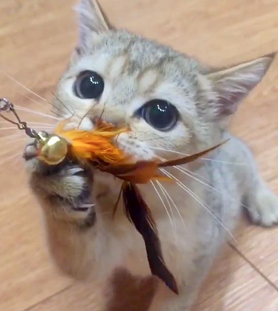 オモチャをギュッとする子猫
