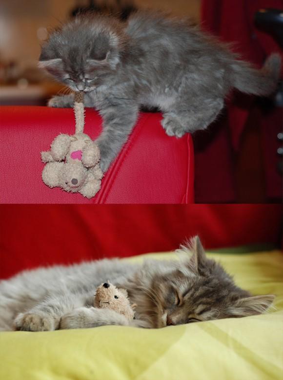 ぬいぐるみと一緒で楽しそうな猫
