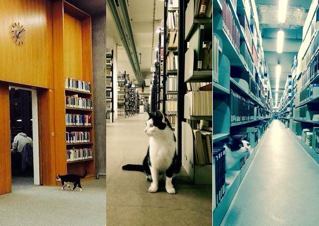 いろんな場所の猫