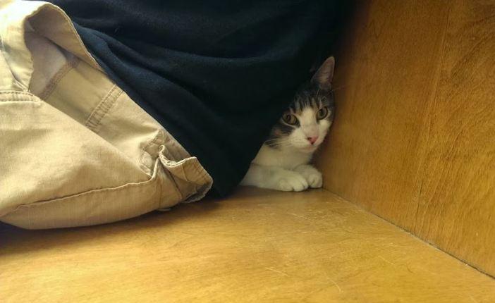 飼い主さんの後ろに隠れる