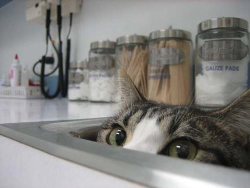 ちょっと覗く猫