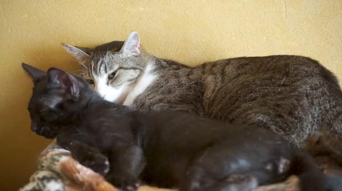 子猫と一緒に寝る猫
