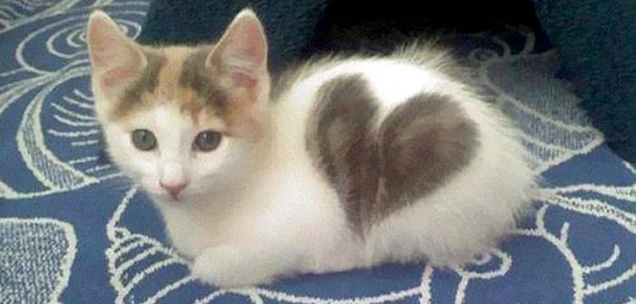 なんだかいいことありそうな予感♡ 身体に可愛いハート模様のある猫さん 13選