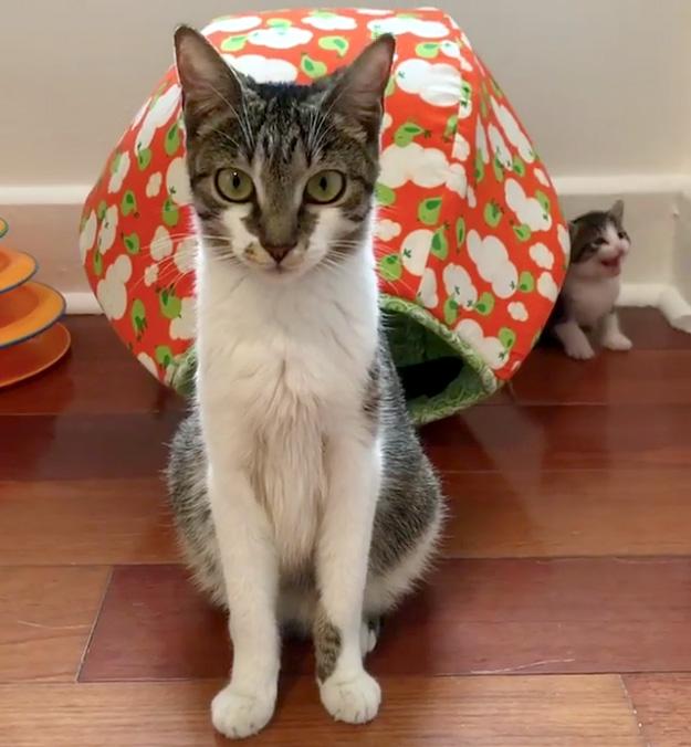 母猫を探す子猫