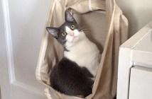 問題児と言われた猫
