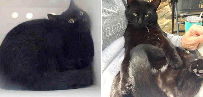 保護された黒猫