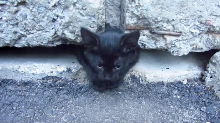 コンクリートから出てくる子猫