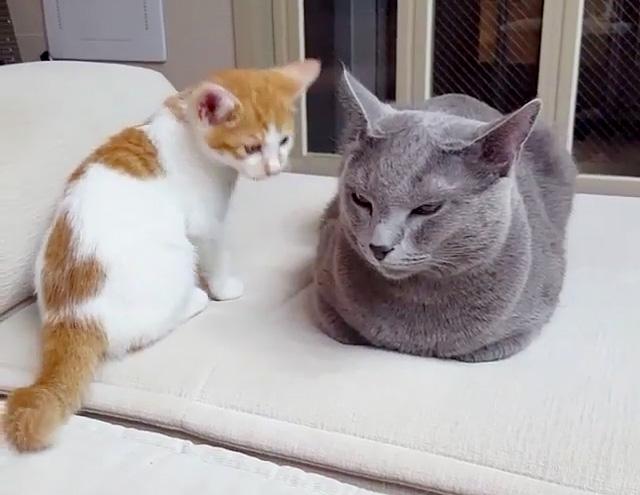 眠たい先輩猫と子猫
