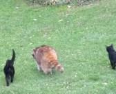5年前から世話をしていた盲目のアライグマが、2匹の子猫を連れて来た! それ以来、毎日一緒に姿を現すようになって…