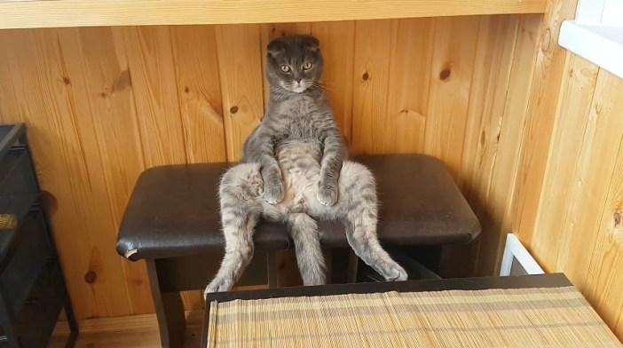 しっかりと座る猫