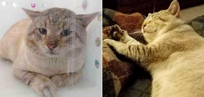 救われた猫