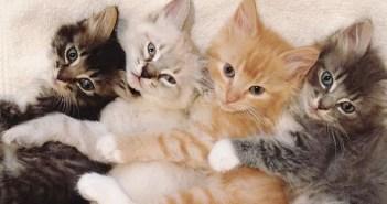 新しい家で暮らし始めた、仲良し子猫4兄弟。そのお昼寝姿がとっても可愛かった ( *´艸`)♡