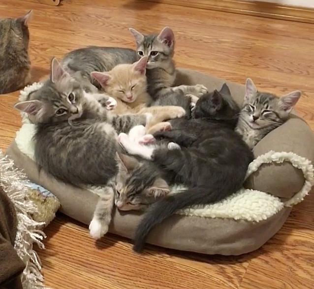 ソファー好きの子猫