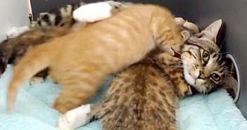 子猫に愛情を注ぐ猫