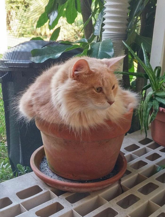 植木鉢のベッド