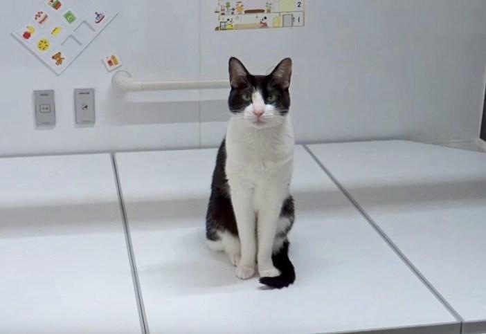 お風呂で待機する猫