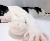 いつも玄関でお出迎えしてくれる猫が、なぜか今日は姿を現さない!? そこには可愛い理由があった ( *´艸`)♡