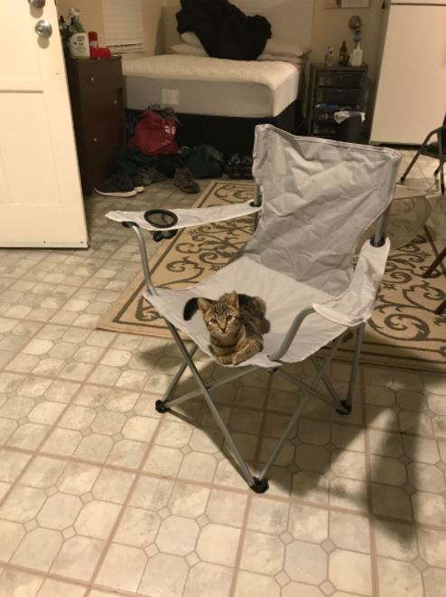 椅子の上の猫