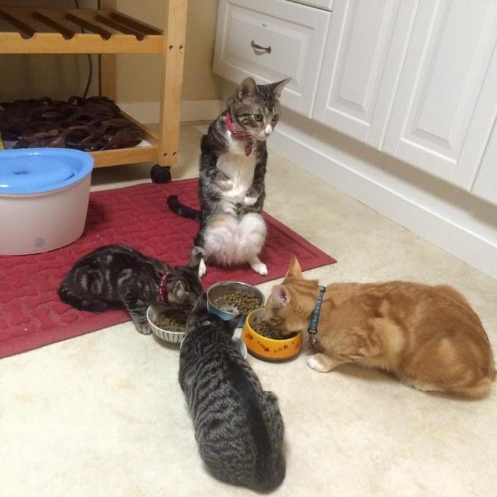 ご飯タイムの猫