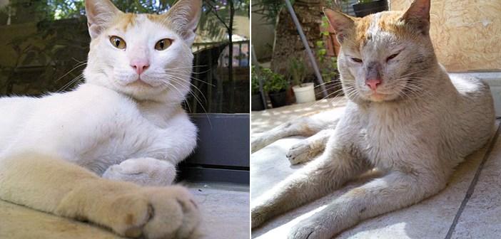 帰って来た兄妹猫