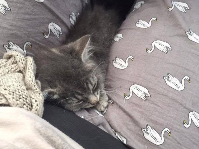眠りにつく子猫