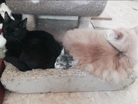 友達と一緒の猫
