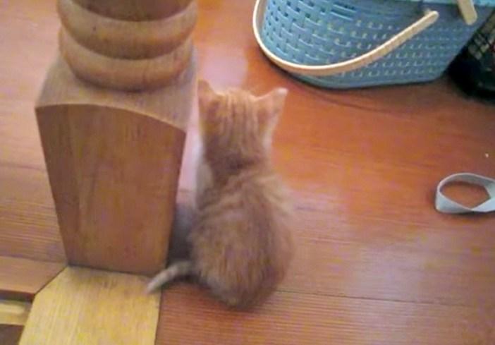 シュンとする子猫