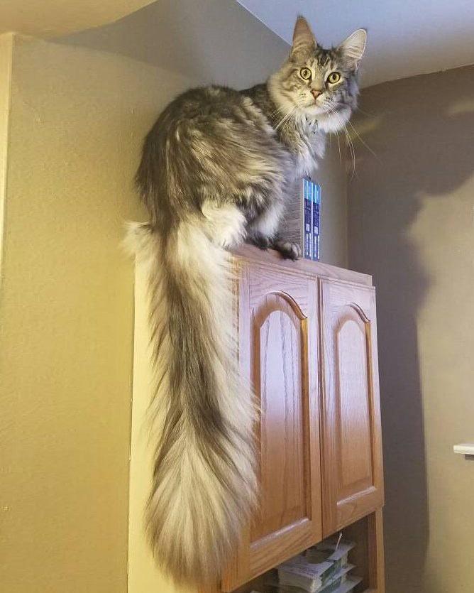 尻尾の長い猫
