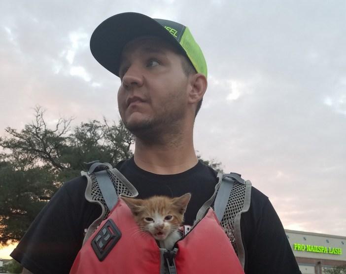 助け出された子猫