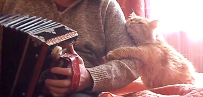 アコーディオンと猫
