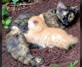 裏庭で1匹の子猫を出産した母猫。大切な我が子を守るため、ずっと避け続けてきた人間に助けを求めてきて… (5枚)
