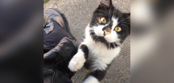 見上げてくる猫