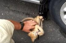 タイヤ交換の手伝いをしてくれる子猫