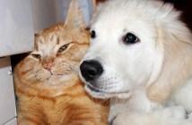 犬を拒み続ける猫