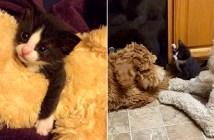 犬に育てられた保護子猫