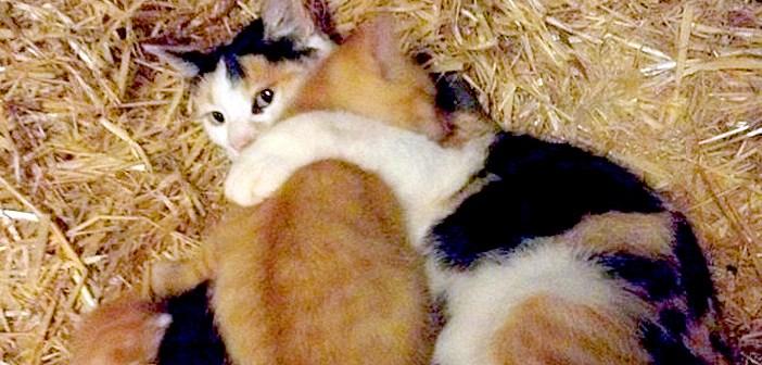 納屋の子猫