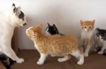 先住猫と4匹の子猫が初対面