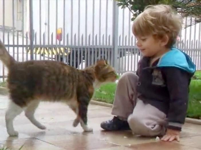 出会った男の子と猫