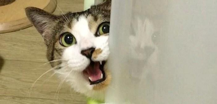 返事をする猫