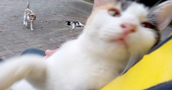 猫をモフモフ
