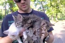 4匹の子猫を保護した男性