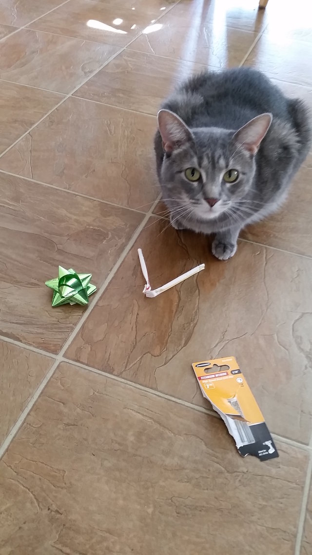 パーティーグッズと猫