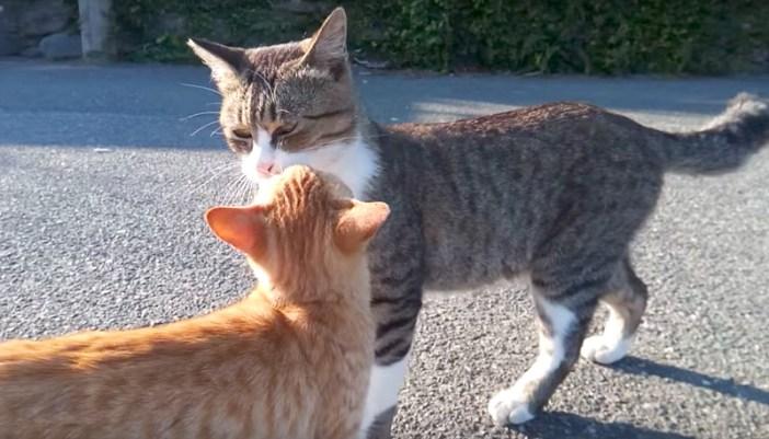 猫との出会い