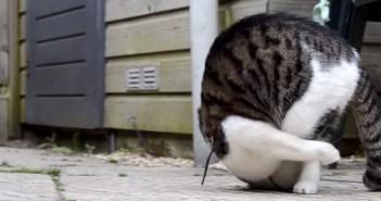 前転する猫