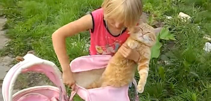 猫と女の子