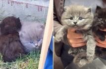 茂みのかで発見された子猫